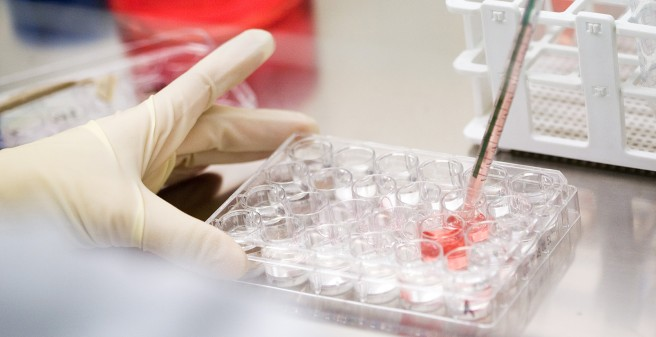 Scientist generates tissue culture