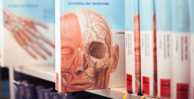 Uke Anatomy And Experimental Morphology Curriculum And
