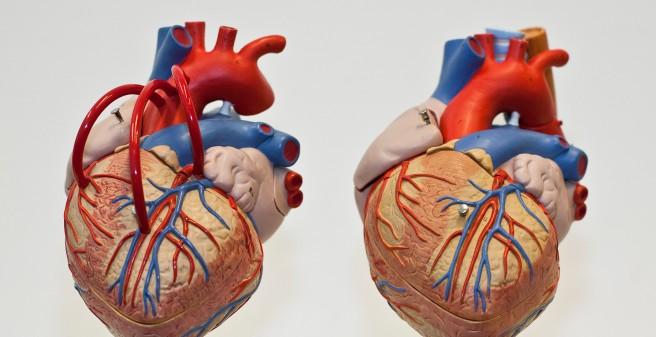 UKE - Prodekanat für Lehre - Regelstudiengang Medizin