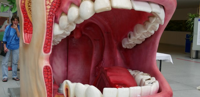model of an oral cavity