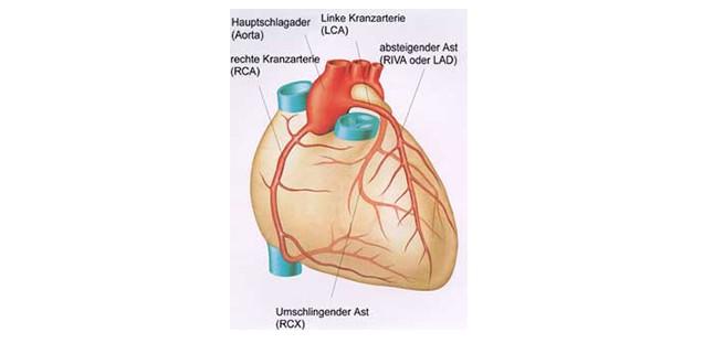 UKE - Herz- und Gefäßchirurgie - Forschung